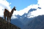 Llama in the clouds