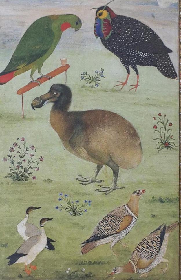 Jahangir's Dodo by Mansur