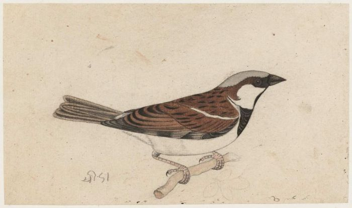 Sparrow  - Rajasthan, 19th Century