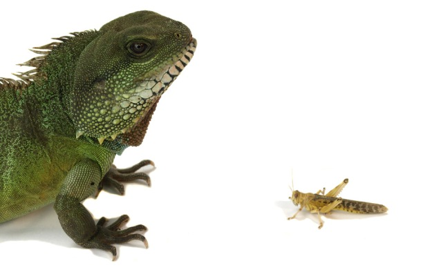 Locust and Chameleon | Photo by Nik Taylor/Getty