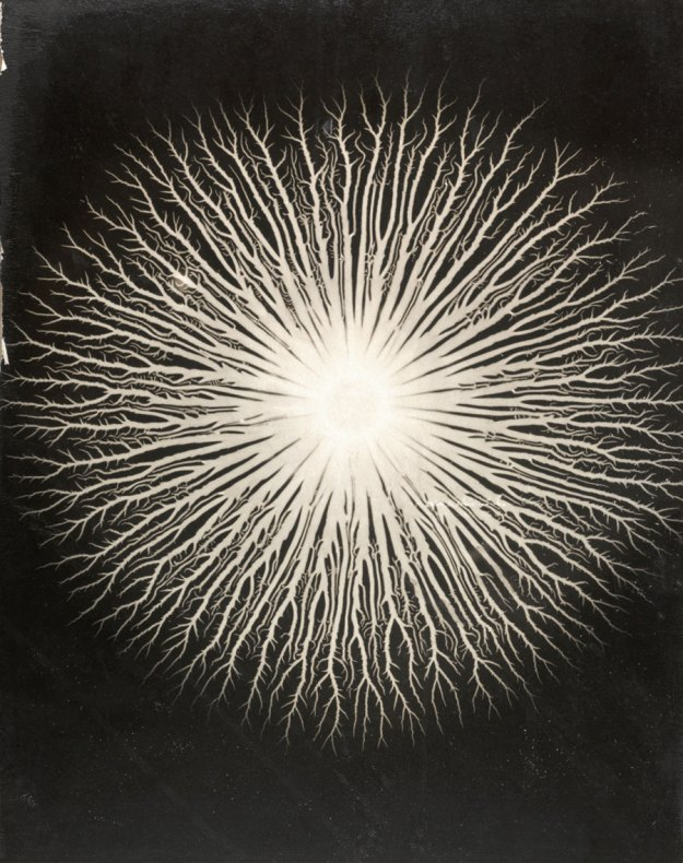 Lichtenberg Figures:  A. R. von Hippel, 1951 by Gyorgy Kepes (U.S.A., b. Hungary 1906-2001) Photographic enlargement on particleboard Lent by Department of Special Collections, Stanford University Libraries Click image for larger view.