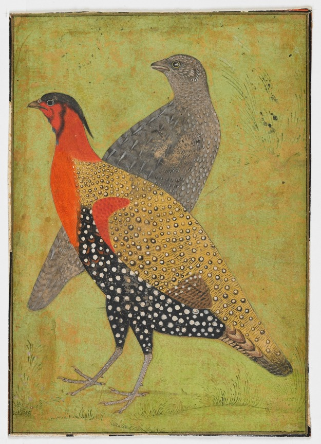 Two Pheasants - Mughal Dynasty (early 17th century), India. | Freer & Sackler Galleries  | Click image for larger view.