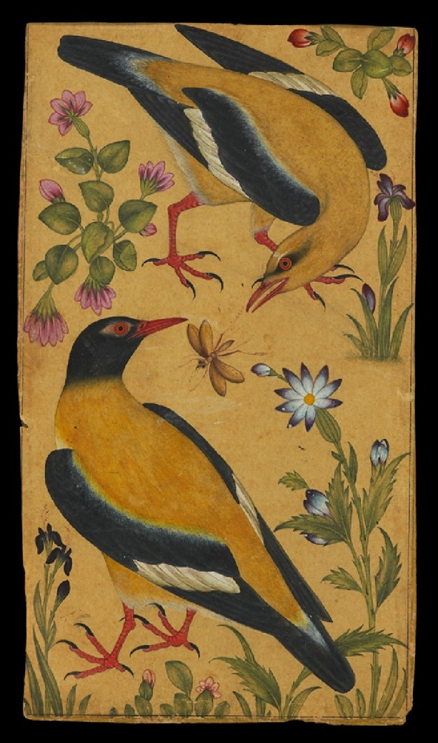Two Orioles, Mughal, North India, c. 1610